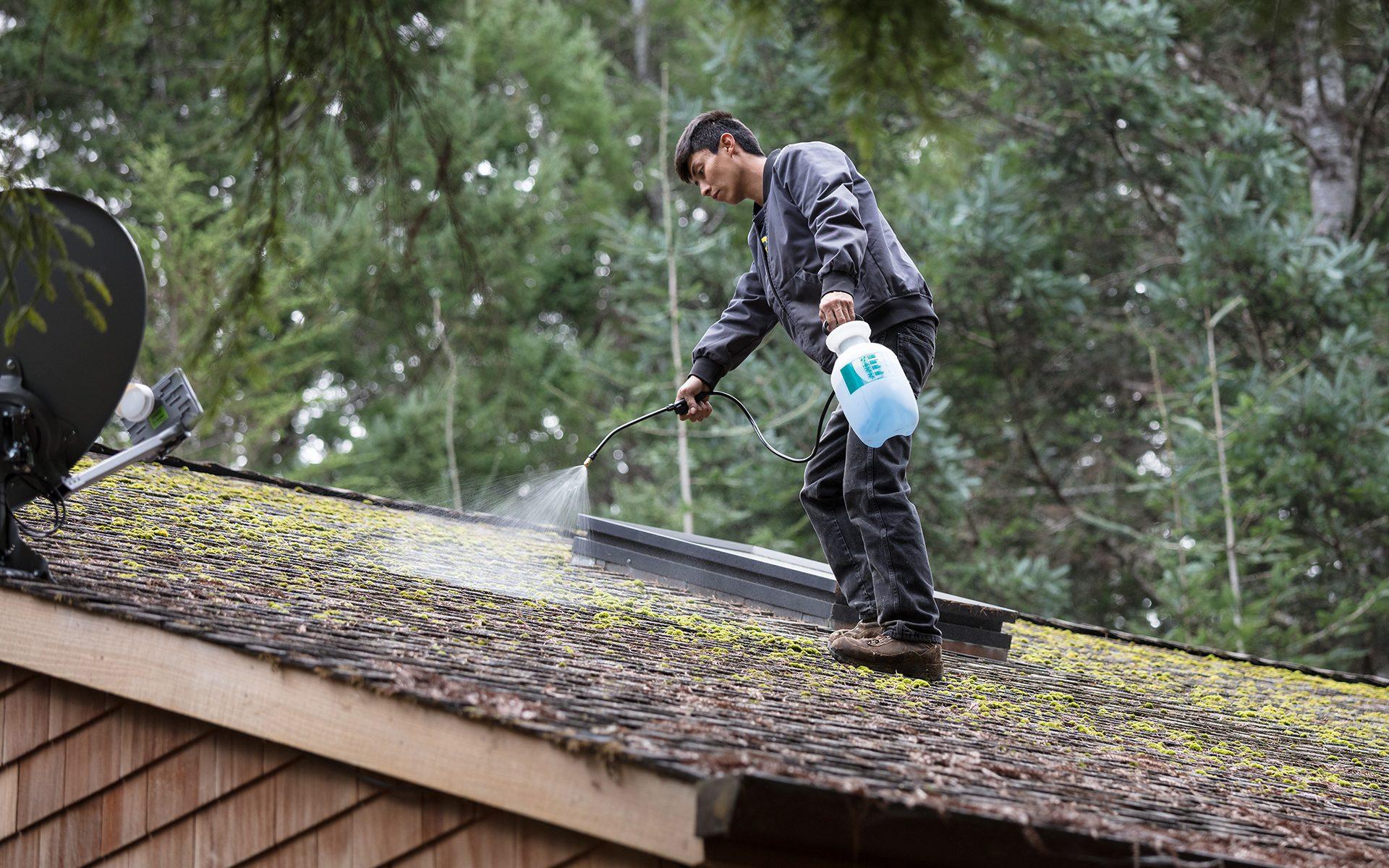 Démoussage d'un toit
